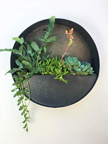 Runde Wandvase zum Aufhängen für Sukkulenten oder Kräuter – schöne Wanddekoration für Luftpflanzen, künstliche Pflanzen, Kakteen und mehr, dunkle...