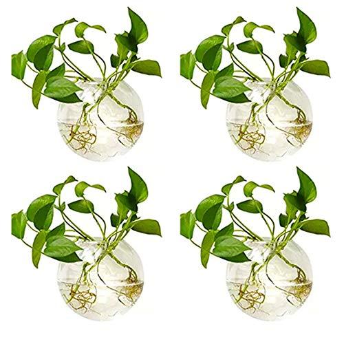 Nuptio 4 Stück Vase en Verre Mural et Créatif, Conteneur Suspendu Hydroponique Végétal, Décoration de Mur de Maison/Vivant