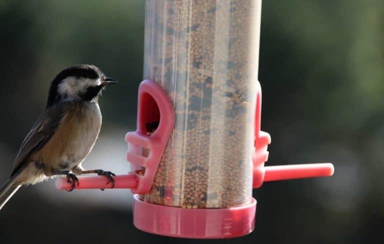Vogelfutterspender zum aufhängen - Ideal für Balkon und Garten