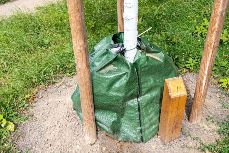 Bewässerungssack an einem Baum